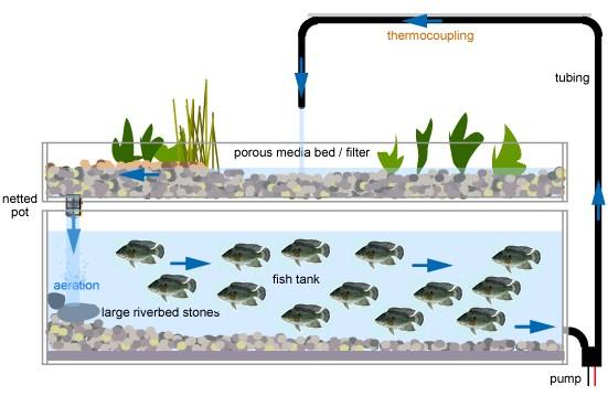 Aquaponics-System